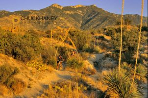 Mountain Biking near Tucson