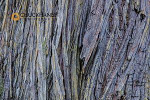 Cedar-Bark_001-434.jpg