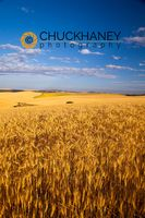 Wheat Kendrick