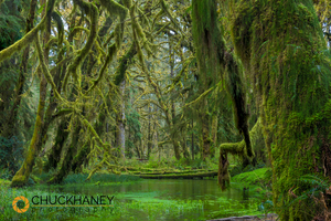 Quinault-Rainforest_009-copy.jpg