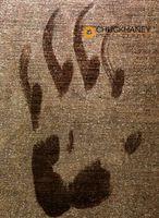 Bear-Paw-Print-495.jpg