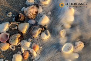 Sanibel-Seashells_004-448.jpg