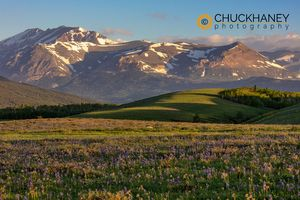 Front-Range-Wildflowers_015-456.jpg