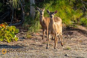 Key-Deer_003-491.jpg
