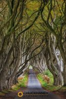 Dark-Hedges_018-470.jpg