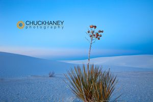 White_sands_035_copy.jpg