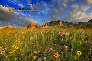 Prairie Wildflowers @ Windy Creek