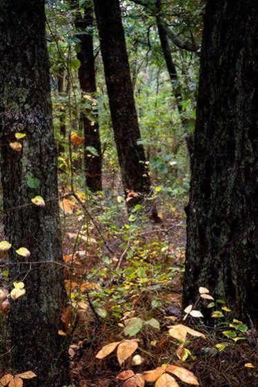 6_0_303_1v2_autumninbrightwoods1_101311_mg_0171.jpg