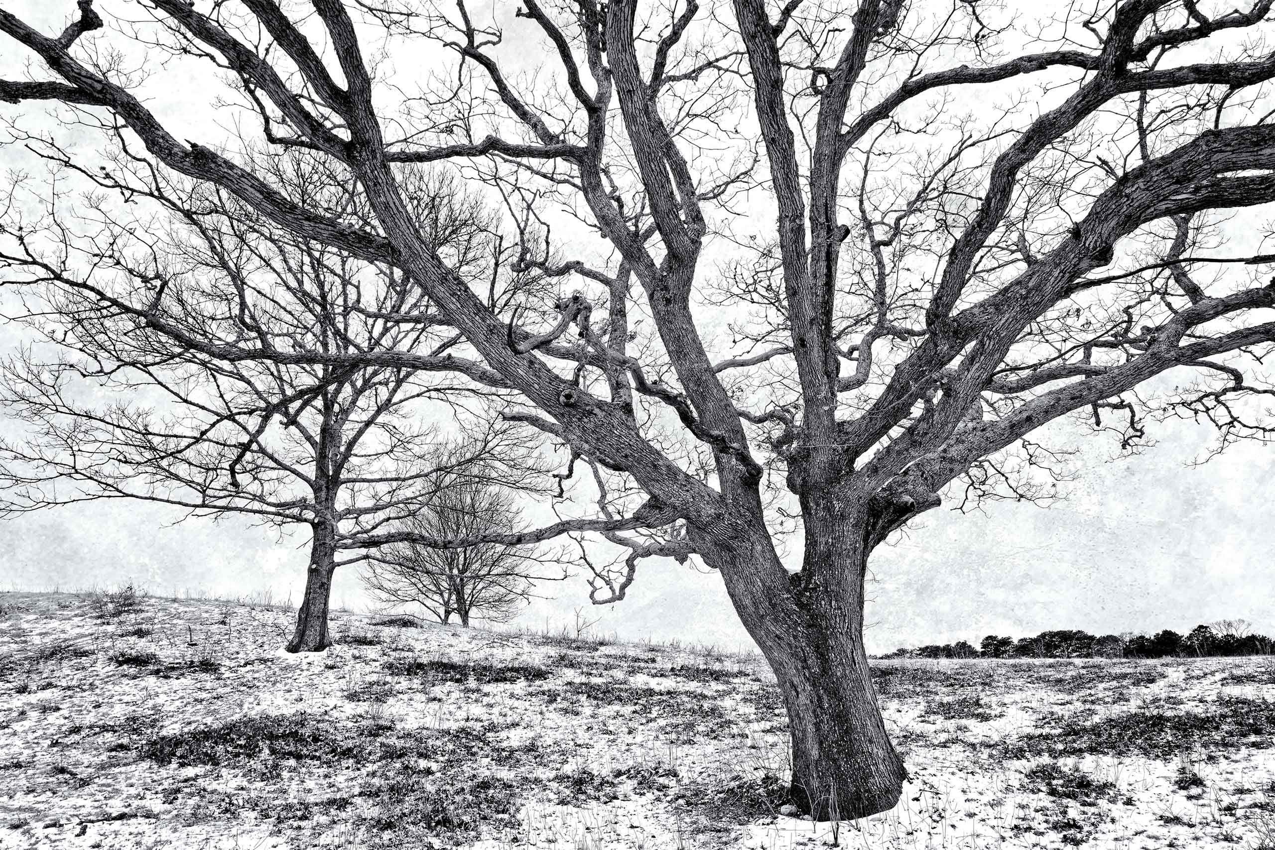 Gray Skies, Winter Trees
