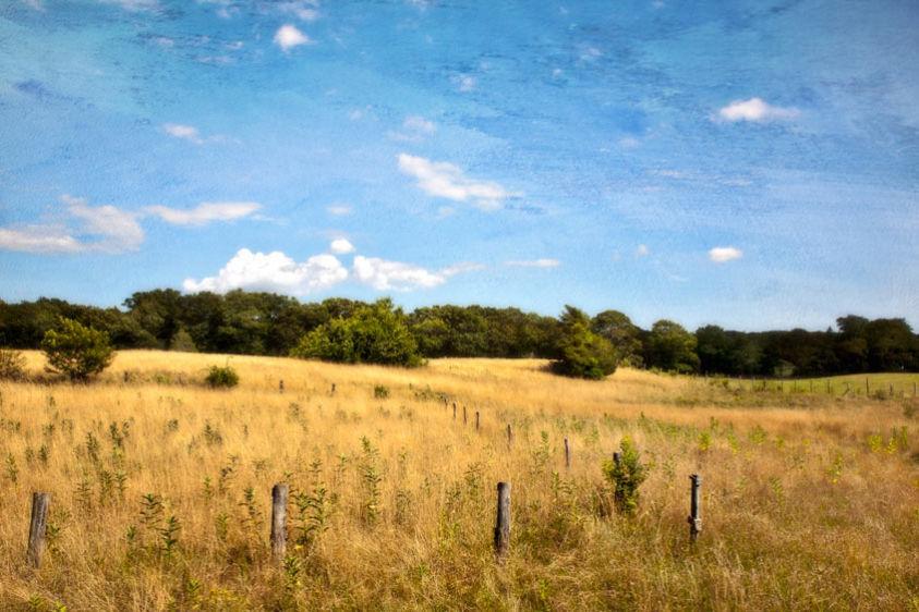 A Midday Walk, Tashmoo Farm 2011