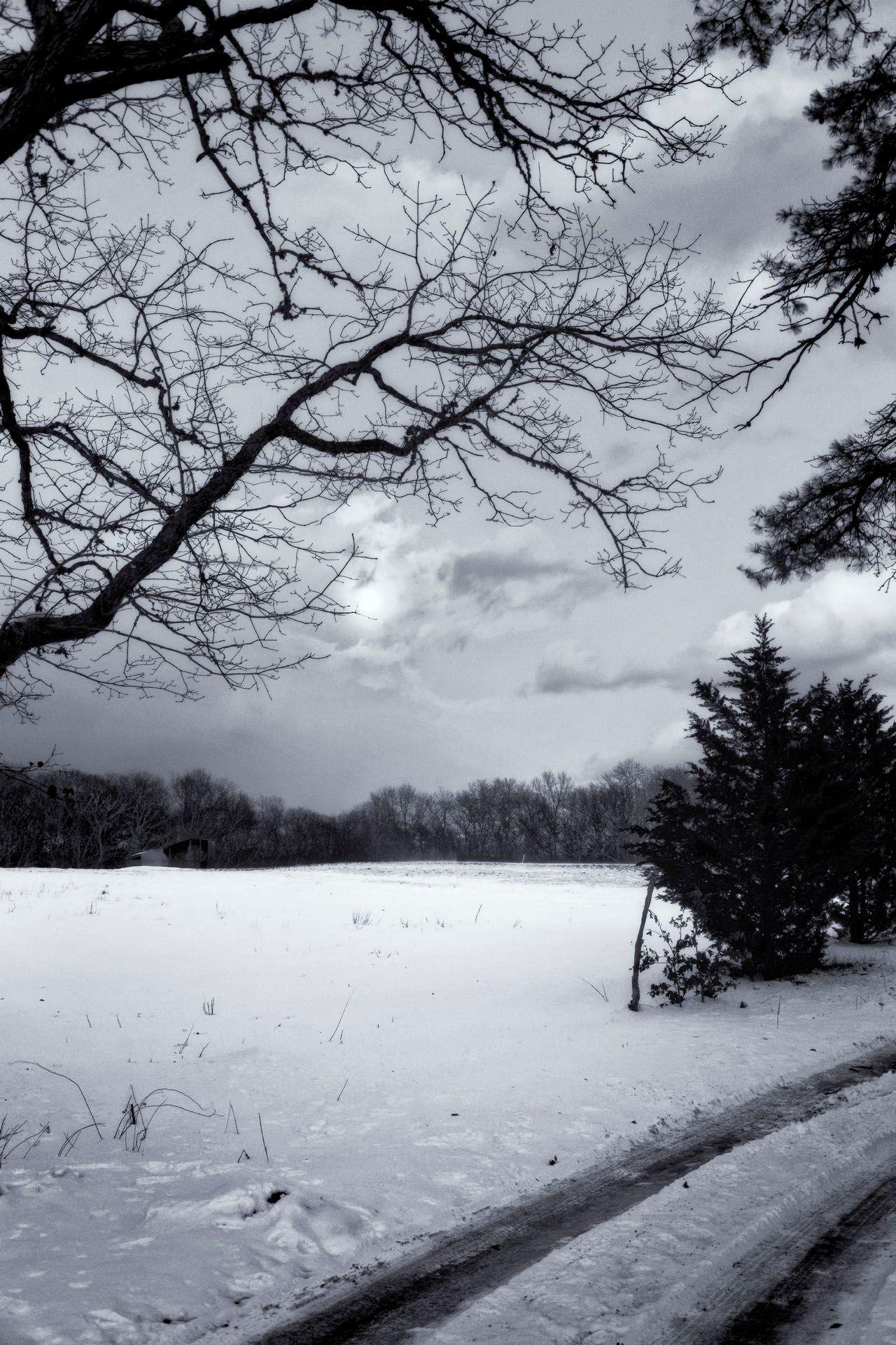 March Moonlight