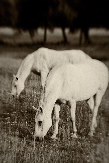 Equine Symmetry, 2010