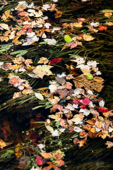 2_0_621_1autumnabstract1_priester_spond2013_16x24.jpg