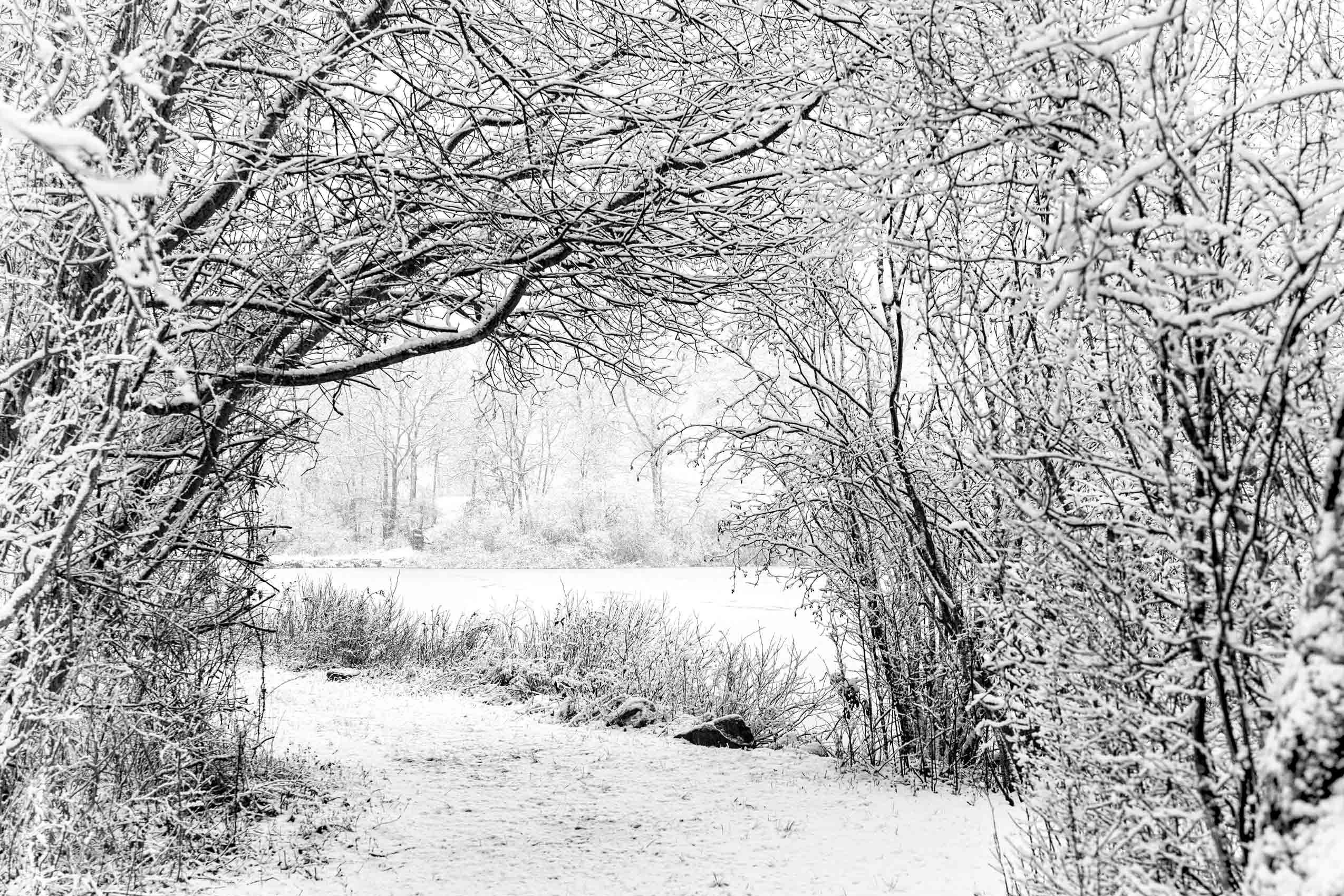 A Mind Of Winter, Priester's Pond, 2021