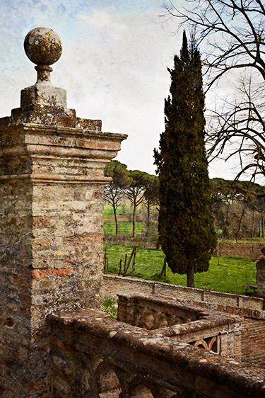 Gate Post and Cedar, Castel del Piano 2010
