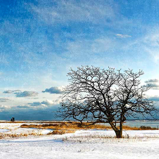 Blue Winter Day, Martha's Vineyard, MA