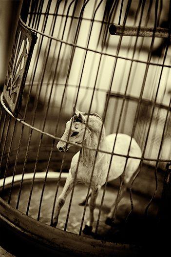 Caged, 2010