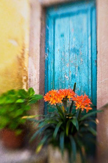 6_0_658_1v4_sintra_bluedoorwithflowers__mg_8561_032909.jpg