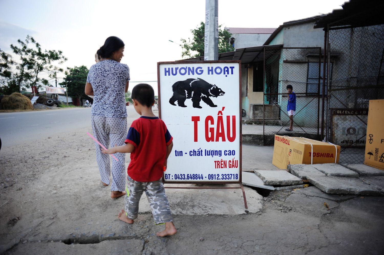Bear Bile Industry