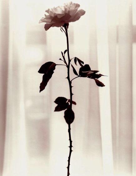 30.roses