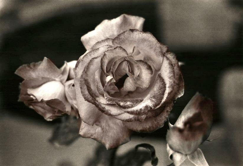 11. roses