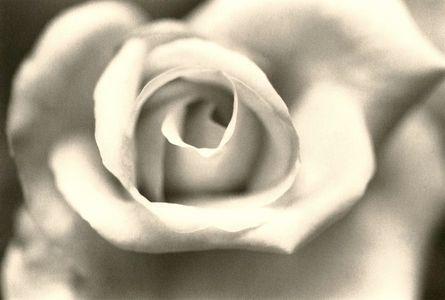 4. rose glory