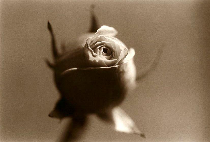 3. roses