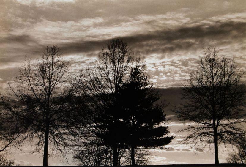winter trees, 1988