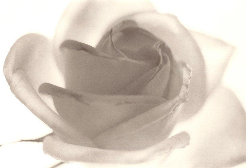 29. roses