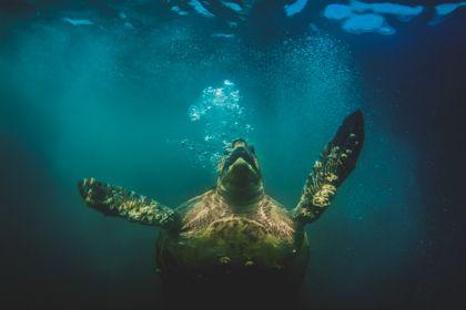 STRANDED: Sea Turtles of Baja, Mexico