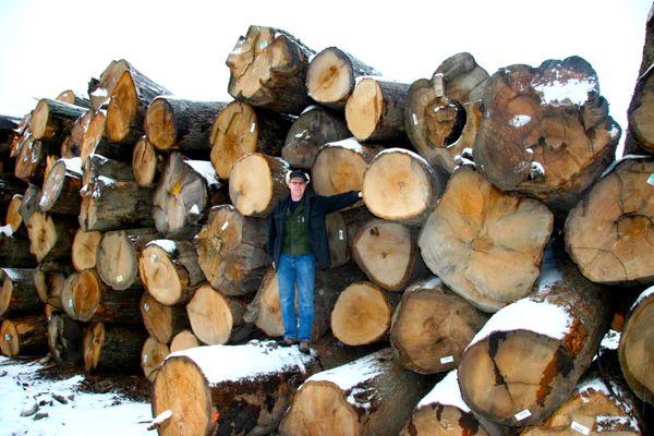Tom Salisbury-White Oak Logs