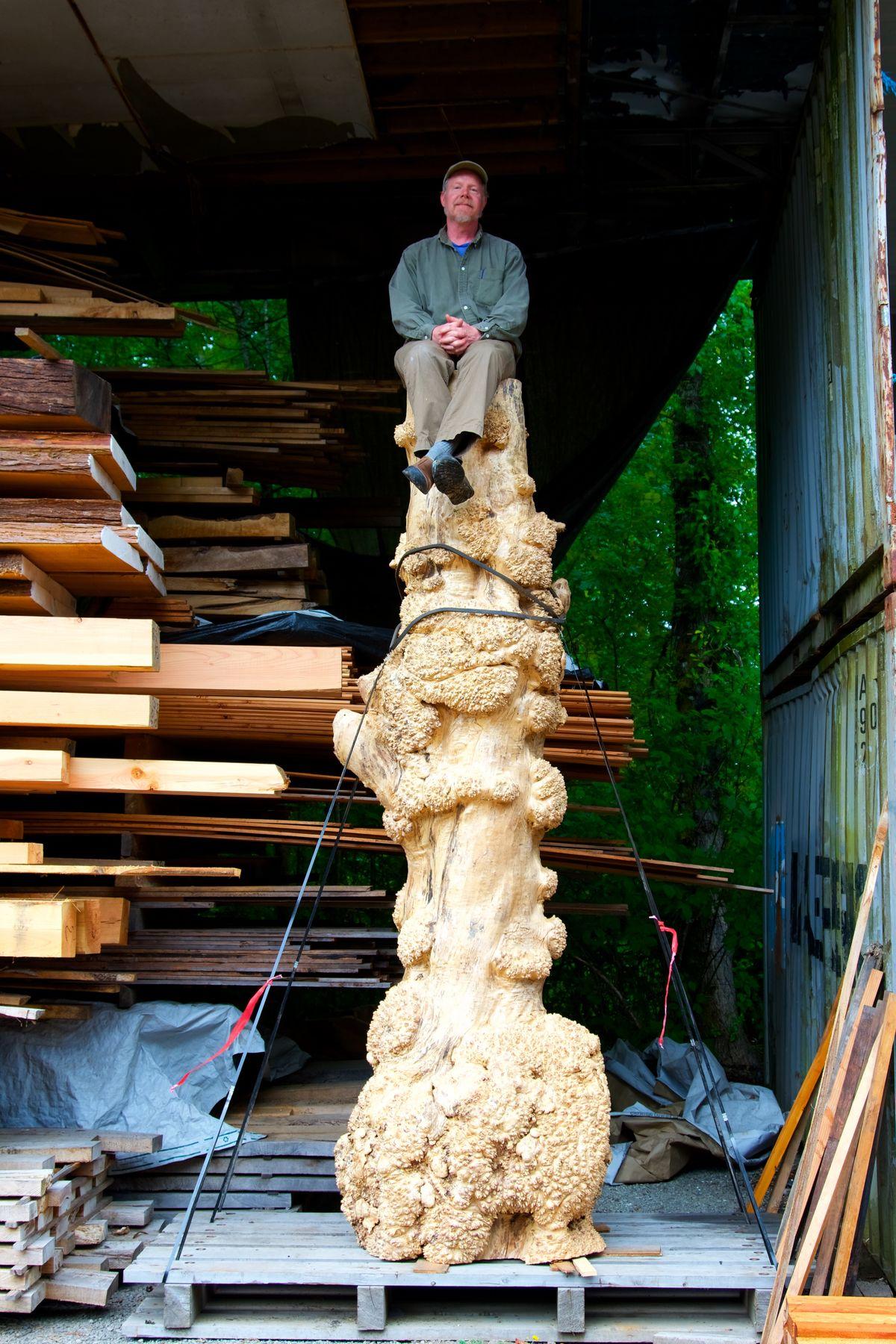 Tom Salisbury atop large western maple burl