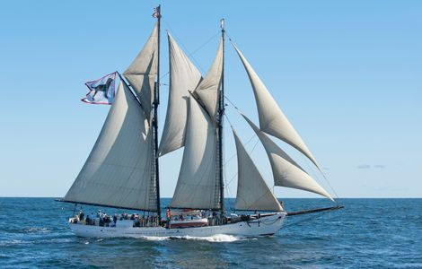 Schooner Alabama Black Dog from Martha's Vineyard, MA art print