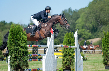 Professional Horse Jumping in Wenham, MA