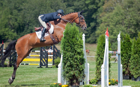 Horse and rider at jumping practice  Myopia
