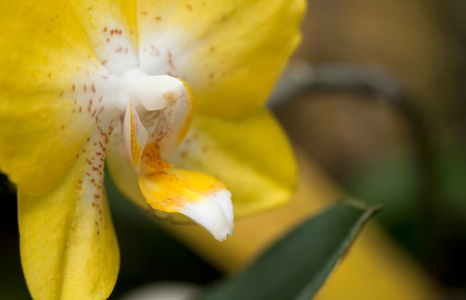 Orchid flower photography art print for interior design