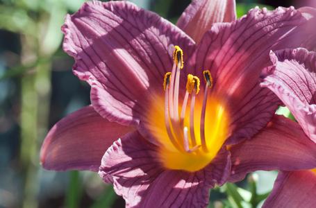 Lily flower art print for interior design