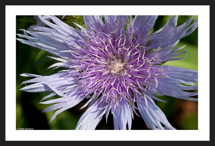 Flower art print macro for home and office
