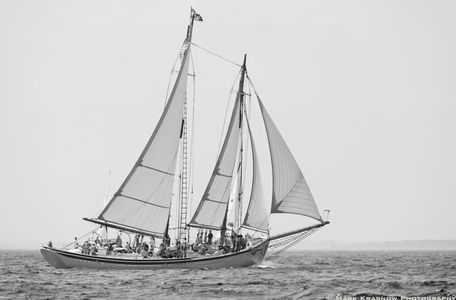 Schooner American Eagle of Rockland, Maine in Gloucester, MA - b&w art print