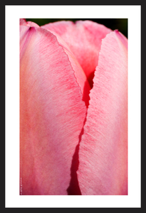 Tulip flower vertical art print