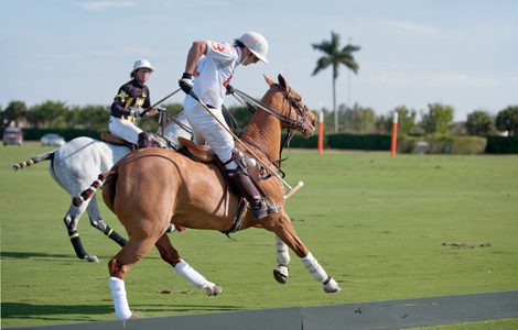 Polo match Wellington Florida