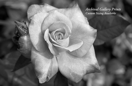Rose flower art print collection B&W