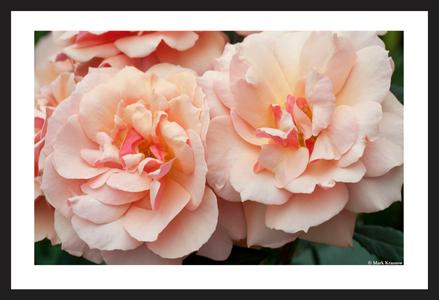 Pair of Roses