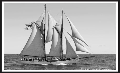 Alabama Black Dog -Sailboat Art print for home and office