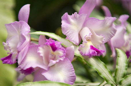 Orchid flower photography art print for home & office