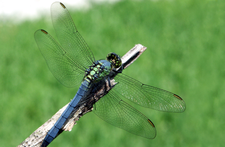 Dragonfly nature photography art print