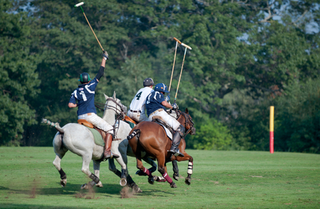 Polo match at Myopia Polo Grounds in Wenham. Mass.