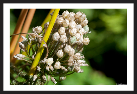 Flower bud art print macro for home and office