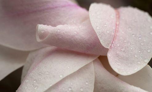 Flower blossom art print macro