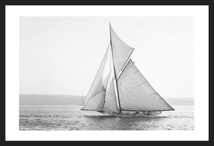 Wasp -1894  - Historic antique sailing photography art print restoration